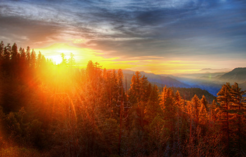 theworldwelivein:  Sunset over Forest in Yosemite (by Stuck in Customs)