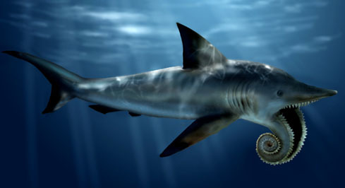 Shark Week Profiles: Whorl Shark  Image Source: Karen Carr Studio Species: Whorl SharkLength: 10-15 feetDistribution: Northwestern…  View Post shared via WordPress.com