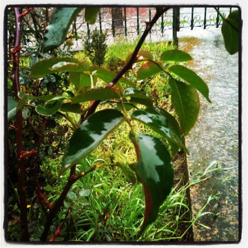 Y llueve más / and it falls even more rain (Tomada con Instagram)