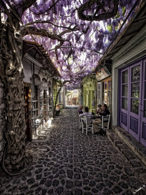 batesnursery:  yessyraptor:  Alkaios Hotel, Molyvos, Greece  Can we just talk about the trunk on that Wisteria? Incredible.