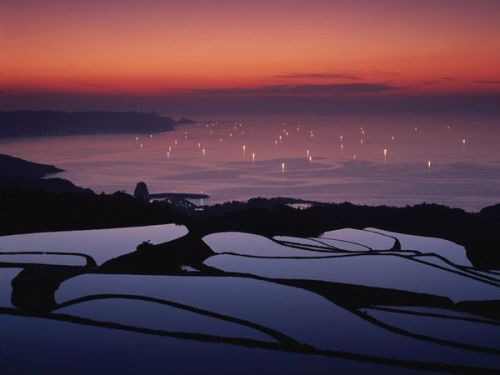 the-iridescence:  Rice Terraces Photograph by Jtb Photo Flooded rice terraces overlook water sparkling with fishermen's fires. Rice, which has been cultivated in Japan for at least 2,000 years, is an important staple of the Japanese diet. The country's hilly and mountainous landscape is particularly suited for farming the grain.