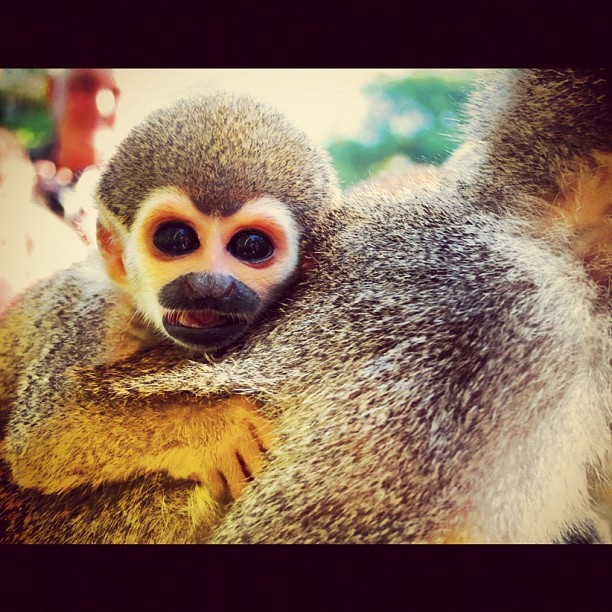 #monkey (Taken with Instagram)