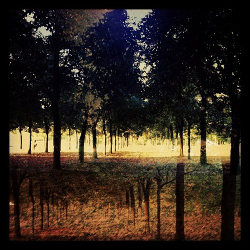 #walk #wood #light #trees #nature #outdoor #trunk #Paris (Pris avec Instagram)