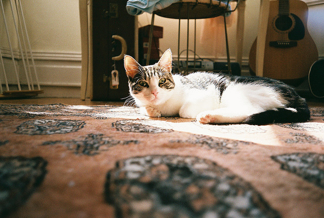 Claude by haydenelizabeth on Flickr.