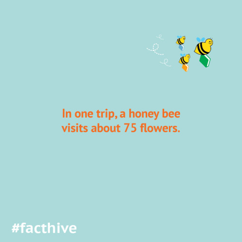 In one trip, a honey bee visits about 75 flowers.