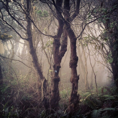 The trees (Taken with Instagram at Gn.Tangkuban perahu)