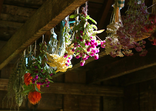 tumblueberry:  rain-storms:  Drying Flowers by melingo wagamama on Flickr.  Lauren's future cellar xD or maybe her room at the inn now.  Current cellar. I like the idea. Let's hope Håkan is not allergic *yaolauren*