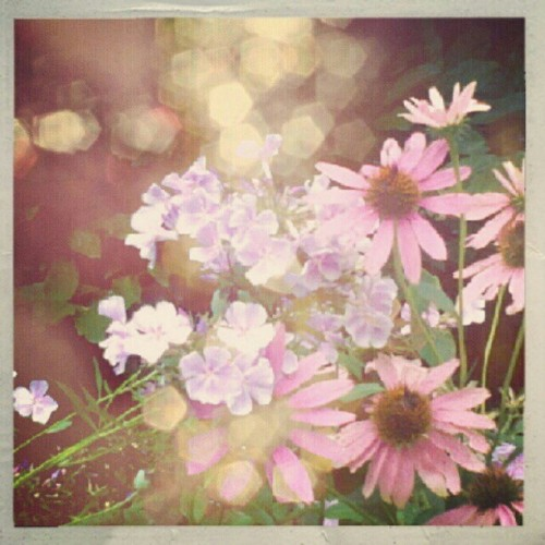 #flowers (Taken with Instagram)