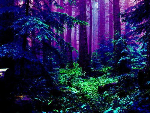 merryprankster:  Fluorescent Forest (Sharp Detail Version) by PsyHye.