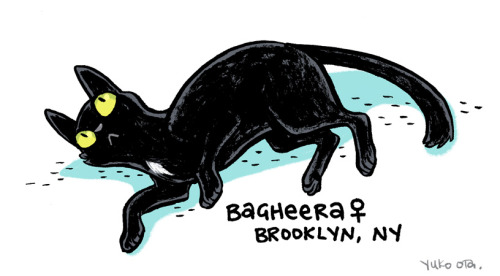 drawdoption: In honor of yesterday's Black Cat Appreciation Day, Yuko Ota has kindly made up some submissions! You might be familiar with her black cats. Bagheera is a sweet and gentle lap-cat!  She loves other cats and doesn't scratch or bite. More information on Bagheera!  Yesterday was Black Cat Appreciation Day!  Black animals have a hard time getting adopted, and black cats have it especially rough around Halloween.  I drew a few portraits of black cats available around the NYC area for my pal Katie's Drawdoption project!  They'll be posted over the course of the week.