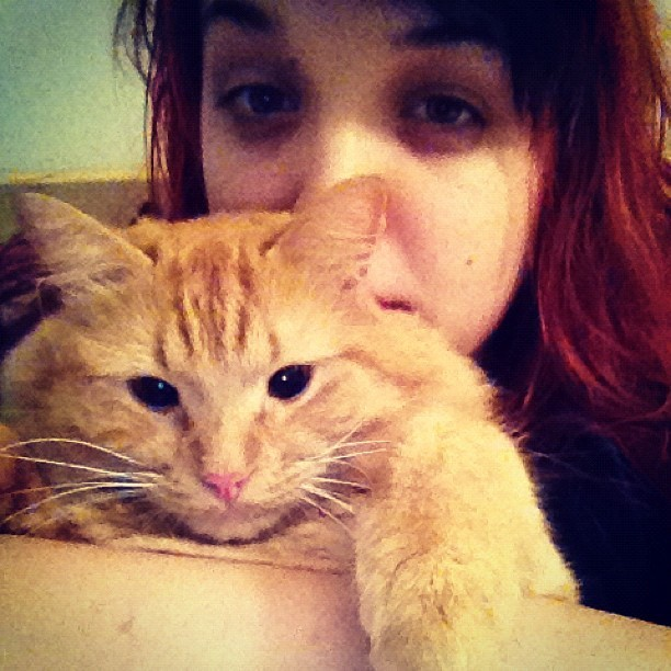 Me-ow #cat #cute #catsofinstagram #cuddles (Taken with Instagram)
