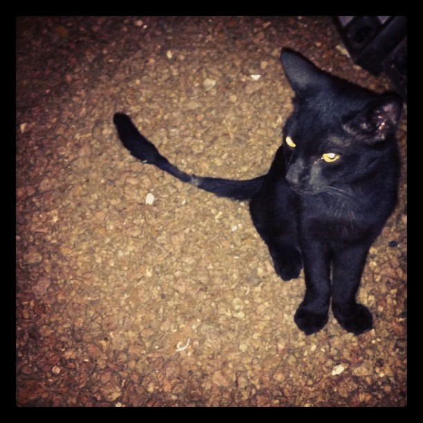 Scrawny black cat is torn and tattered. #blessitsheart (Taken with Instagram at The Monterey)