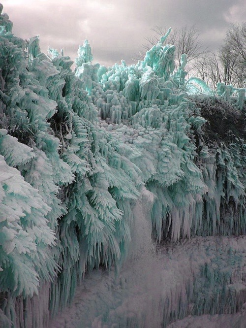 trippingoverjoy:  Crystallized trees, nature is neat.