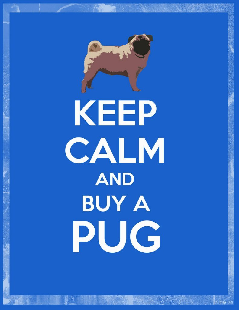 Cloggy:— Sound Advice megellen:  Lucy The Pug:  Buy a Pug a new dress!