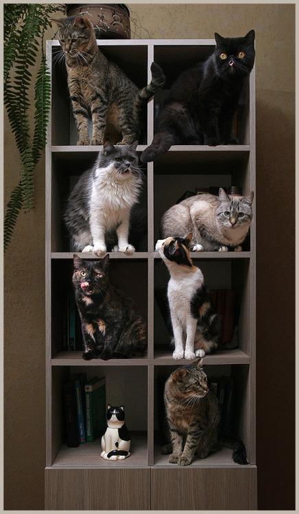 magicalnaturetour:  Cat House by Sheyla2 :)   Une armoire à chats, j'adore!
