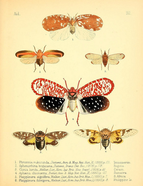 n138_w1150 by BioDivLibrary on Flickr. Aid to the identification of insects /.London :E.W. Janson,1880-90..biodiversitylibrary.org/page/7673442