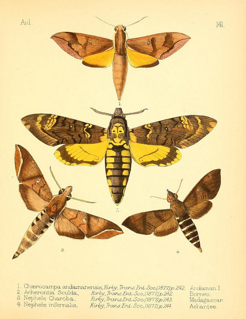 n116_w1150 by BioDivLibrary on Flickr. Aid to the identification of insects /.London :E.W. Janson,1880-90..biodiversitylibrary.org/page/7673315