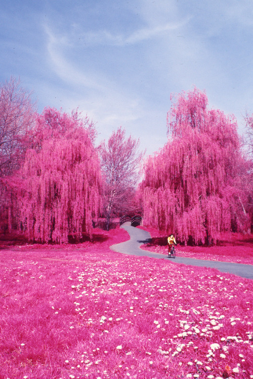 dearscience:  Colour Infrared - Canterbury, Spring 2010