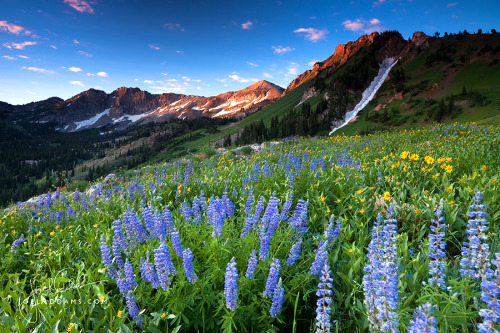 Sunrise in Albion Basin by Joel Addams