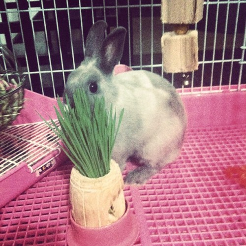 Miffy! Hiding behind her wheatgrass (Taken with Instagram)