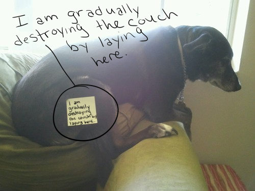 I rewrote it on the photo because the post it note was too small. Bad dog, Dweeb,  just no scruples at all