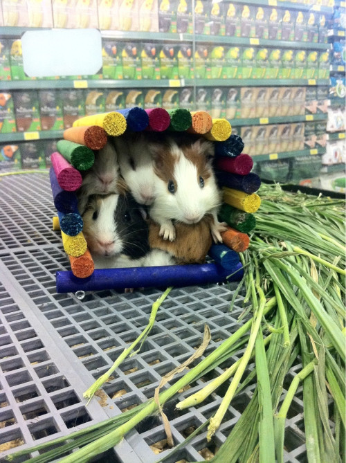 bunnyfood:  (via)   Ughhh look at the cuteness.
