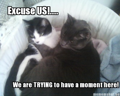 These are my actual cats and I made the meme myself. I am the source, bwahaha!