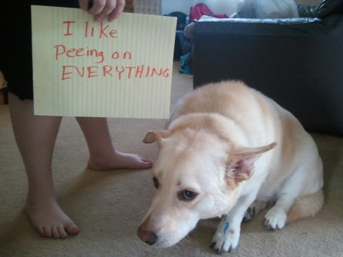 think this dog might actually be feeling the shame