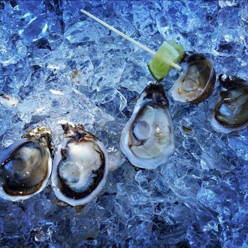 Hog Island Oyster Co. at Zach's company picnic.  I tried them…I'm trying so hard to like #oysters! (Taken with Instagram)
