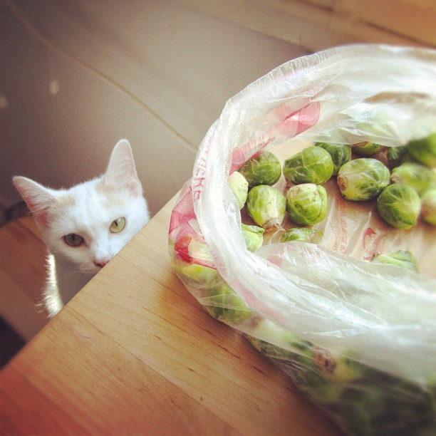 Luna supervises the brussel sprouts. #cat #kitty #cute #food #cooking  (Taken with Instagram)