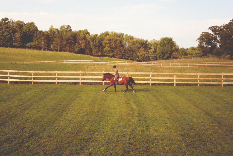 snapshot-equestrian:  Sully loves fields