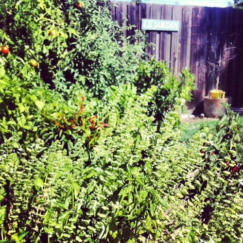 Dana & Crystal's garden. Congrats you two! (Taken with Instagram)