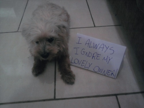 dogshaming:   This is Zelda. She ignores me all the time. I talk to her, I call her, but she doesn't even look at me. ):  shamefully aloof  maybe she is deaf, she looks like a little puppy, have you gotten her checked out for hearing loss?