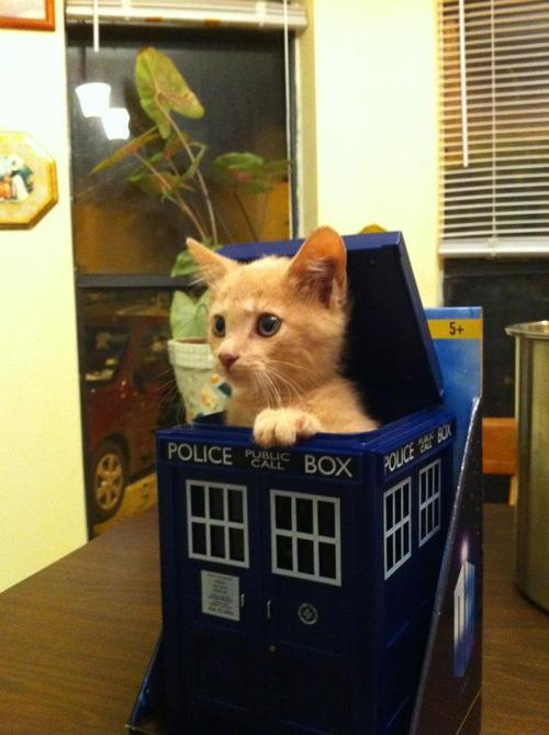 acciopie:  getoutoftherecat:  where's your screwdriver?  finally ginger  Whiskers.  I have whiskers.  Whiskers are cool.