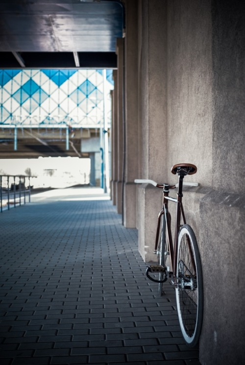 on-the-presidio-banks:  fixie. by Tomasz Lassota