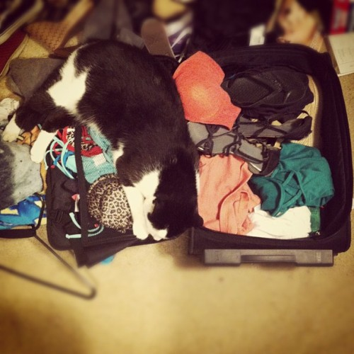 He wants to come with me to Hawaii 😍 #ilovemycat #hesbiggerthanmysuitcase  (Taken with Instagram)