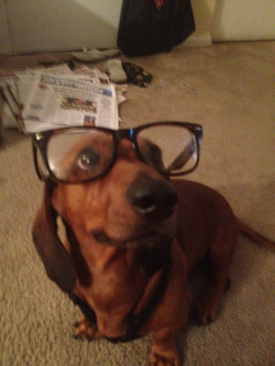 Hipster weenie dog. Need to take a better picture tomorrow