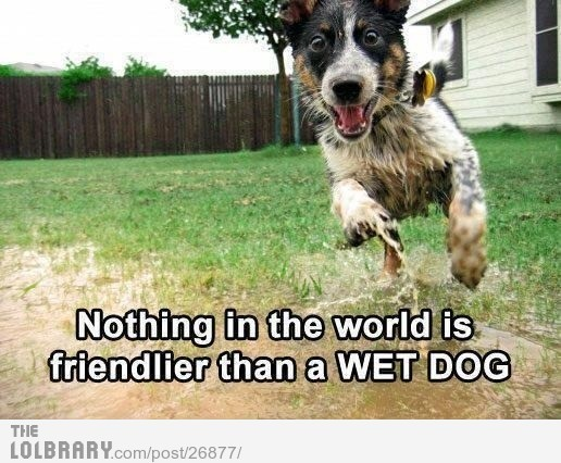 Except for a wet *pussy* catFollow this blog for the best new funny pictures every day