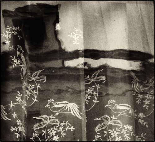 yama-bato:  By yama-bato The Birds ( The windows serie)