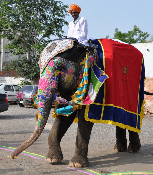 Indian Elephant by Sunnytimes on Flickr.
