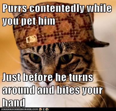 Scumbag Cat: Can't Have You Thinking He Likes Youhttp://advice-animal.tumblr.com