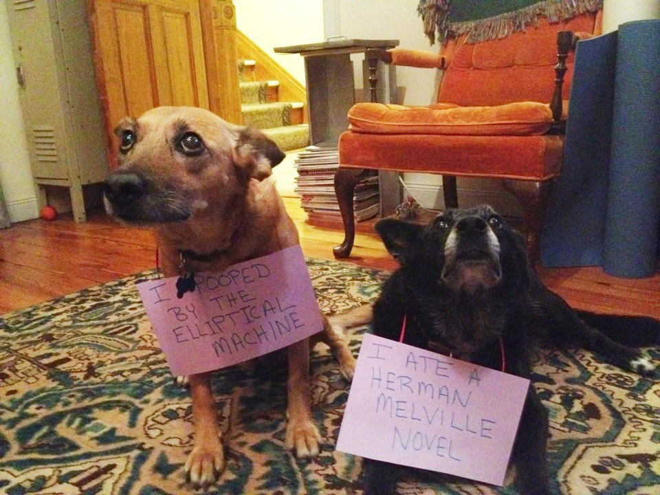 dogshaming:   Jerks.  quite a spread of shame