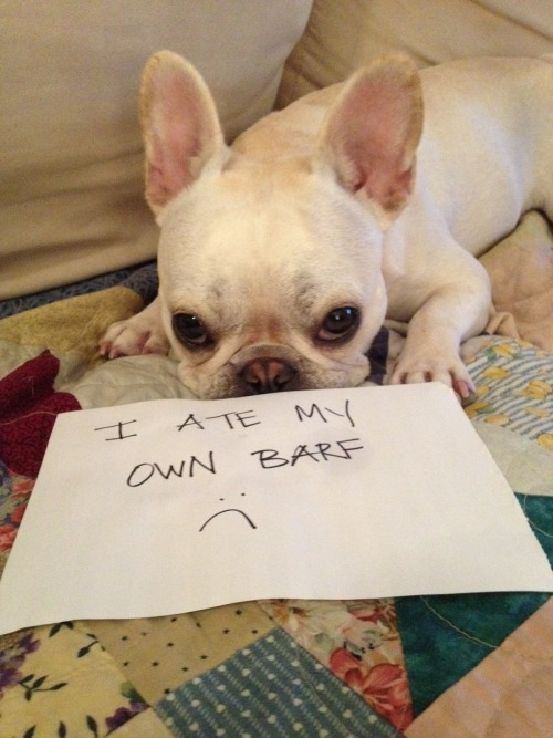 dailydot:  Tumblr's Dogshaming documents dogs behaving badly Humping cats, eating puke, and attacking neighbors are just a few ways dogs lash out when you're not giving them attention. But now there is a new way to get payback: Dogshaming. The group therapy session uses Tumblr for its meeting space as people submit pictures to it with notes placed near the guilty dogs describing what they did. Dogshaming has more than 115 posts within a week of its creation. (continue) dogshaming:   My Shake Shack Pooch-ini tasted better the first time around :(  recycling can be a crime   Today's essential Tumblr.