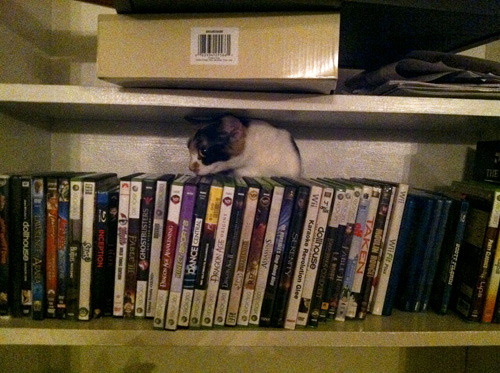 get out of there cat. you can't read and are horrible at alphabetizing my video games and DVDs.