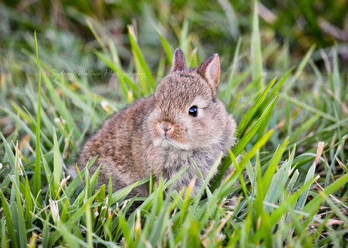 squidgeyw:  bunny on Flickr.