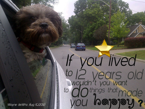 Life lesson from a dog by WayneWho? on Flickr.Life lesson dog in car
