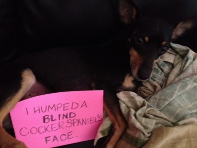 "dogshaming:   ""And I'll do it again.""  morally repugnant  XD"