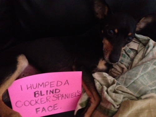 "dogshaming:   ""And I'll do it again.""  morally repugnant"