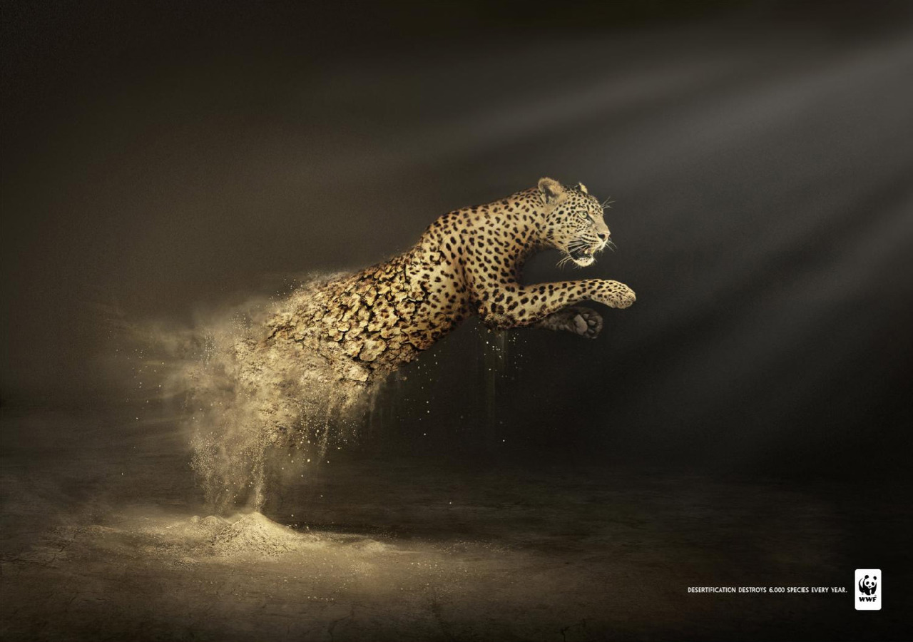 WWF Desertification: Leopard