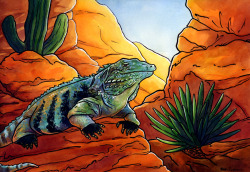 """Canyon King."" Watercolor & Ink. 2012. 2012 entry for Indianapolis Zoo's annual ""Naturally Inspired Paint-Out,"" a plein air painting event that raises funds for the zoo."